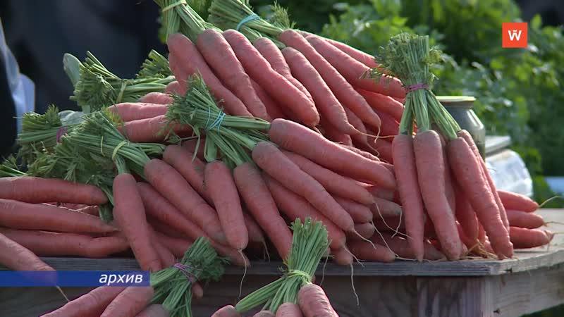 Аграрии Ленинградской области собрали рекордный урожай