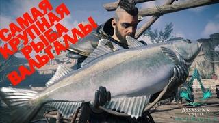 Где поймать крупную рыбу в Assassin's Creed Вальгалла!
