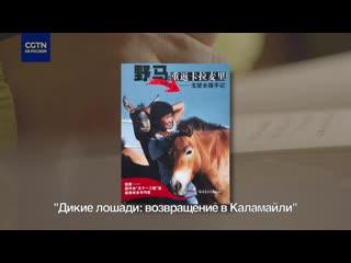 Мой синьцзянский дневник: дикие лошади