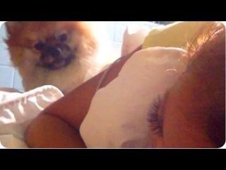 Pomeranian Alarm Clock | Cute Wake Up Call