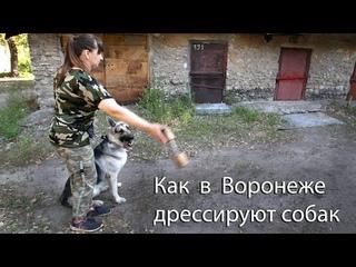 Как в Воронеже дрессируют собак