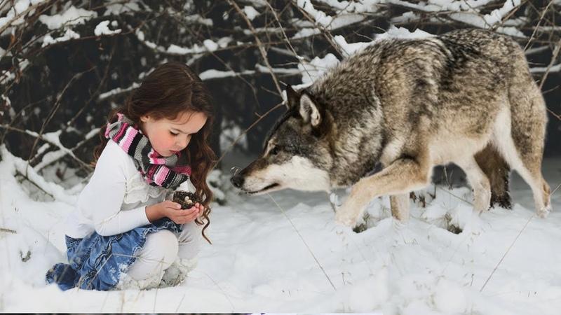 Эта девочка НЕ ДОЛЖНА была дожить до нового года но волчица ЧУДОМ повернула болезнь ВСПЯТЬ