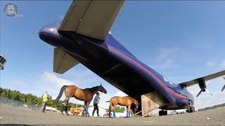 HEAVY Antonov 12 FULL of horses to Finland!! ULTIMATE COCKPIT MOVIE  [AirClips Cockpit Docu]