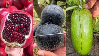 😍Farm Fresh Ninja Fruit   Tik Tok China   (Oddly Satisfying Fruit Ninja) #29
