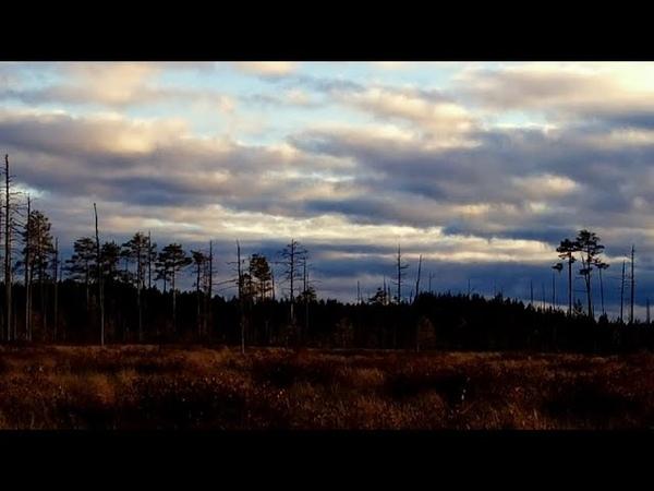 Болото в дремучем лесу Таёжный промысел Хмурые красоты Костромской глуши Унжа в октяре