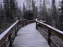 Официально заявляем - в Лесу сегодня наступила зима! .  .  .  .  .  #region51 #winter2021 #регион51