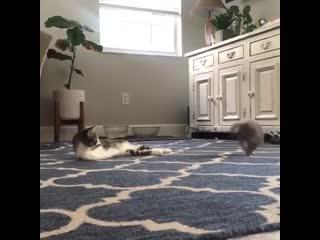 Котику посчастливилось, что у него хозяева с большим сердцем и любовью! 😻