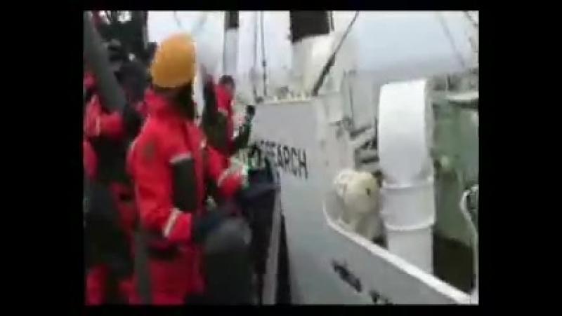 Китовые войны Клип