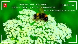 Пироговское водохранилище -7 Beautiful nature सुंदर प्रकृति 美麗的大自然 美しい自然 자연 طب&#