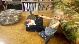 Улыбка кота. Серия 21. Мосик и чемодан. Котенок играет с малышкой Стасей в паучка