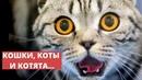 Про кошек, котят и котов. Прикольное видео