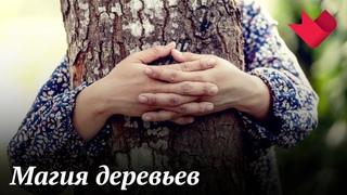 Магия деревьев | Раскрывая мистические тайны