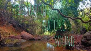 Sound healing, Индия, Гоа, звуки для медитации, свит лейк, джунгли