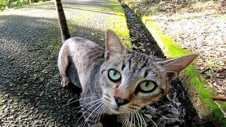 Сначала я был осторожен, но бездомные кошки, которых я полюбил постепенно, слишком милы