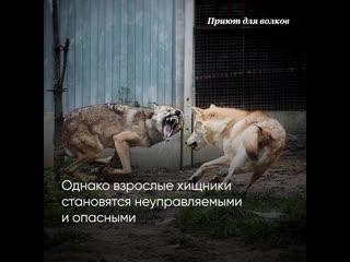 Приют для волков