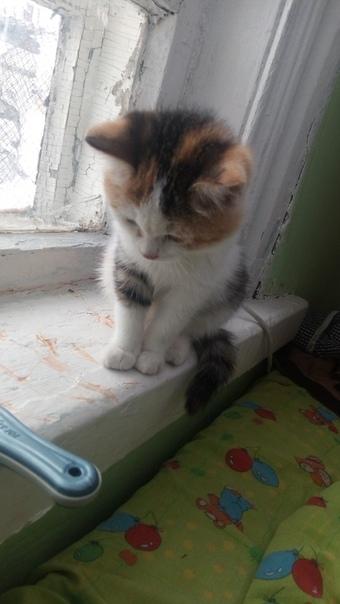 Отдам котёнка даром хорошие руки девочка 3 шерстяная. Зовут Алиса . Лю