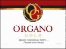 Маркетинг план Органо Голд Organo Gold