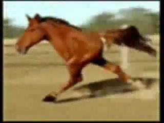 Retarded running horse