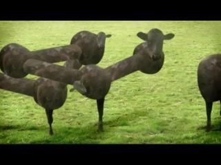 Cyriak harris cows & cows & cows вынос мозга психодел