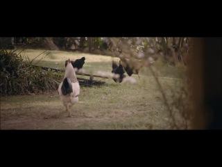 Bella Ferraro - Forgot You (Feat. Will Singe) HD