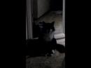 Как чихает кошка