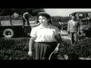 Qizmar Gunesh Altinda Azerbaycan Kinosu 1957