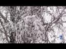 Белая берёза,под моим окном (С.Есенин)