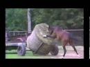 Приколы про лошадей