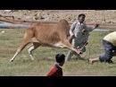 اقوى المقاطع لهجوم حيوانات مفترسة على الب15