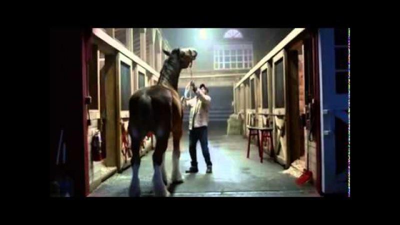 Кони и щенок: как защищают друга!