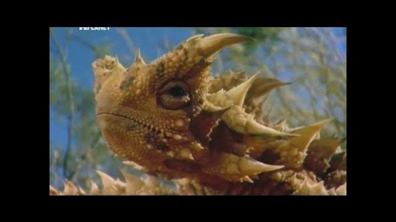Планета Мутантов Австралия Невероятные Животные Нашей Планеты Animal Planet