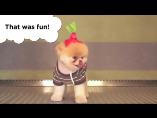 Boo - A Day in the Life of the Worlds Cutest Dog - Book Trailer