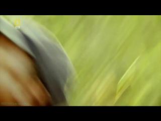 Охота на охотника: Ярость носорога (Документальный, животные, 2007)