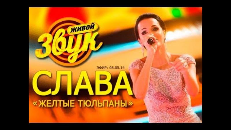 Слава - Желтые тюльпаны ( шоу Живой звук , 08.05.14)