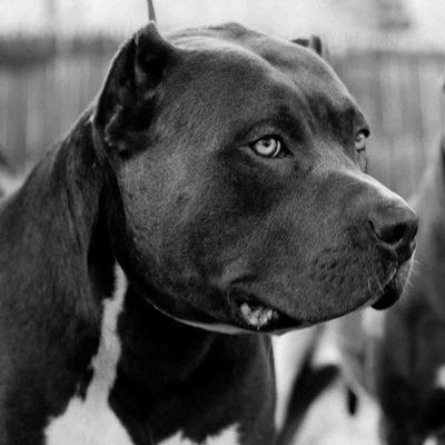 Hills Prescription Diet Canine l d Лечебный корм для собак