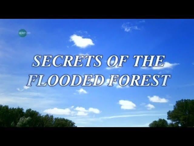 Секреты пойменных лесов. Национальный парк на Дунае
