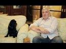 Бельгийский (брюссельский) гриффон. Умная собака. Чемпион - Гарри Шторм. Garry Storm. Видео 1 из 6