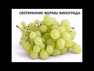 Сверхранние сорта винограда