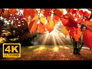 4K Autumn Forest & Relaxing Piano Music - Beautiful Fall Leaf Colors in 4K UHD - 2 Hours