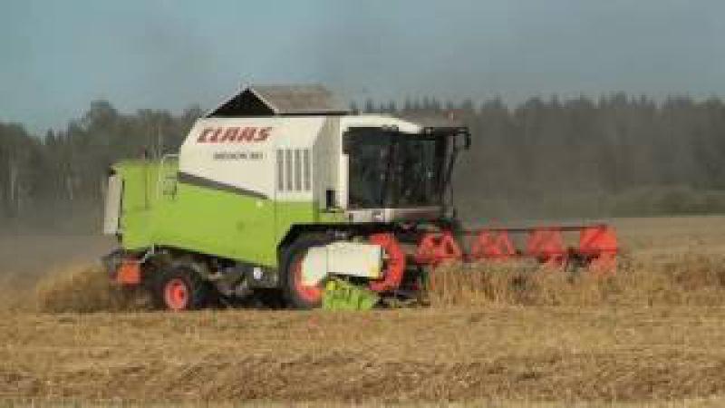 Уборка пшеницы.Harvesting wheat.Weizenernte.Búza betakarítás.Sprzątanie pszenicy