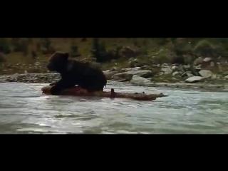 L ours Film par Jean Jacques Annaud
