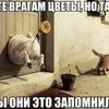 Alesya Grin