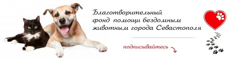 Севастопольский Благотворительный фонд помощи бездомным животным