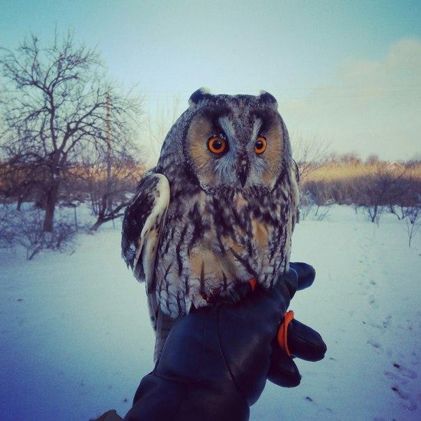 особенностях аренда совы для фотосессии москва главное это