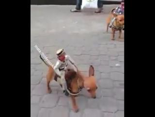 Vaquero)))))