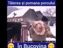 TAIEREA SI POMANA PORCULUI IN BUCOVINA