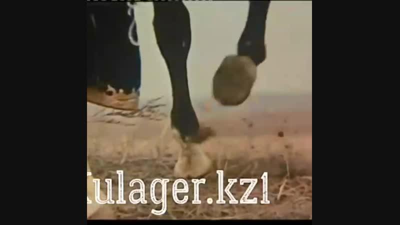 Құлагердің сыны Күреңбаи сыншы