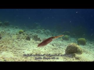 Удивительный океан 3D (Познавательный, природа, животные, 2012)