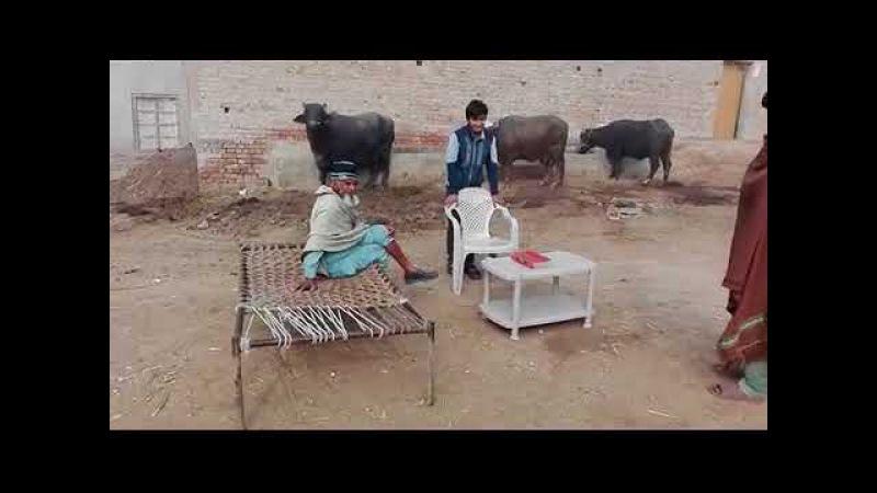 PUNJABI DEERA IN FAISALABAD MOLO ANI HARLAN AND ANIMALS