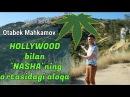 Otabek Mahkamov: Hollywood bilan Nashani o'rtasidagi aloqa